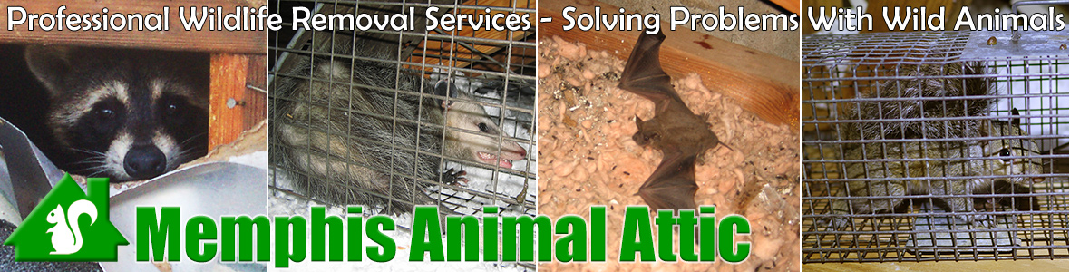 Germantown Animal Attic